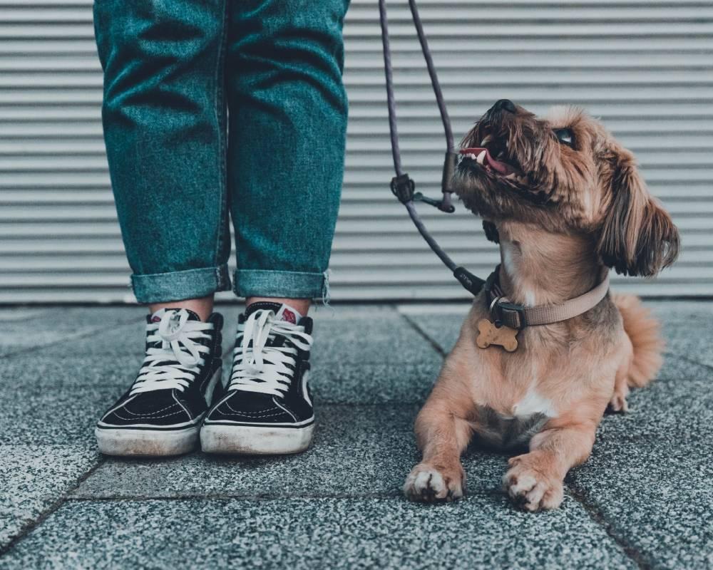 jak vybrat kloubní výživu pro psy