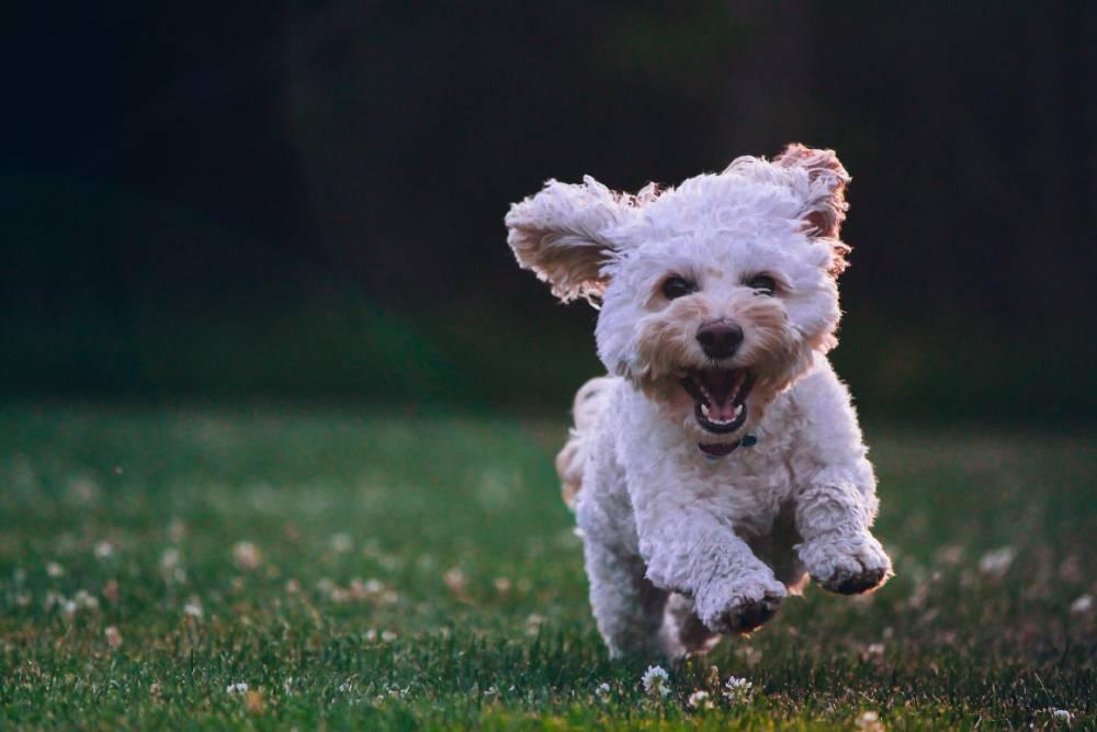 výživa na klouby pro psy